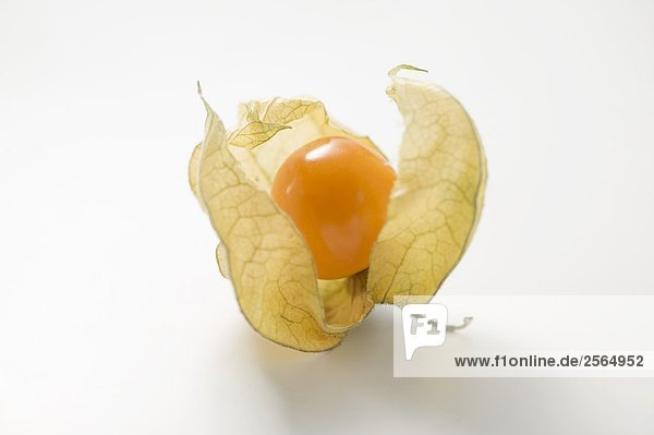 Physalis with husk 965617