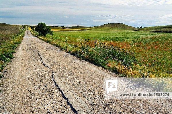 Landstraße. Seseña. Kastilien-La Mancha. Spanien
