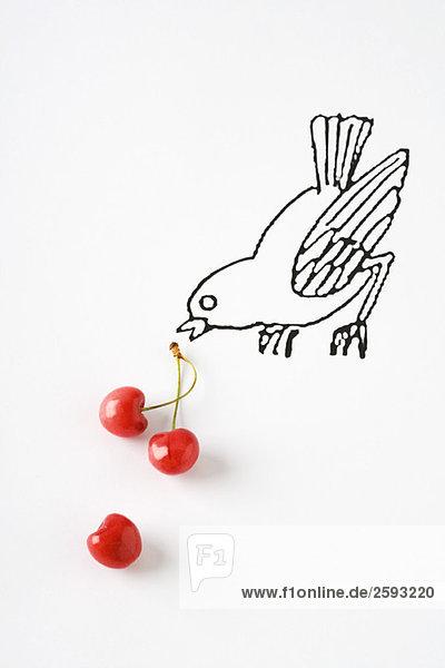 Reife Kirschen und Vogelzeichnung
