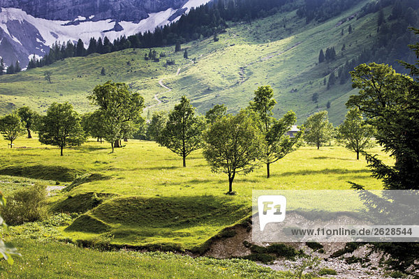 Austria  Tyrol  Landscape with trees