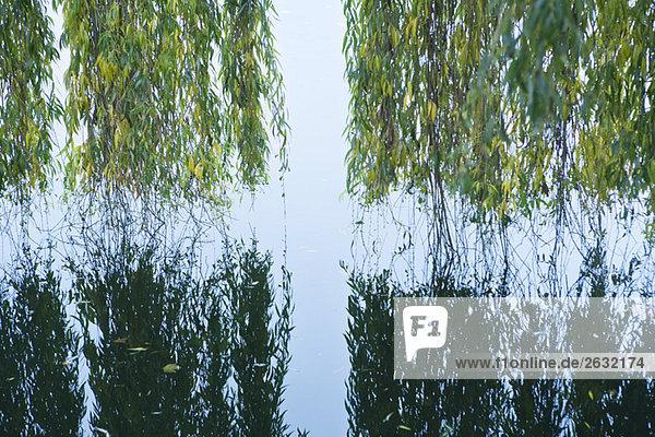 Trauerweide hängend über Wasser mit Spiegelung im Wasser