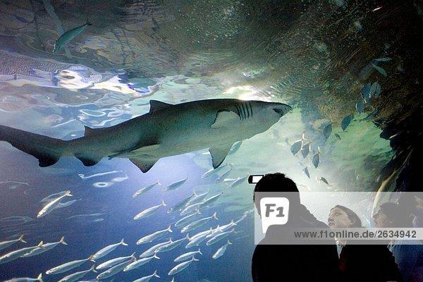 Oceanogràfic Aquarium  Stadt der Künste und Wissenschaften. Valencia  Comunidad Valenciana  Spanien