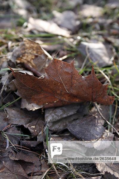 Ein vertrocknetes Blatt