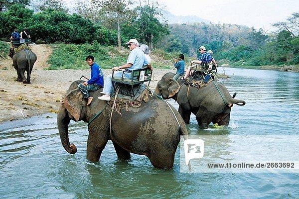 Elefant Reiten Deutschland