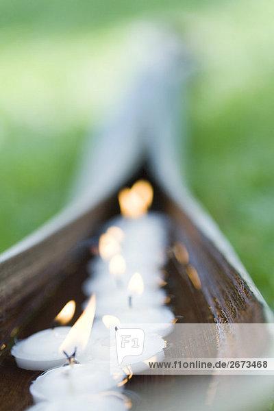 beleuchtet Pflanzenblatt Pflanzenblätter Blatt Kerze