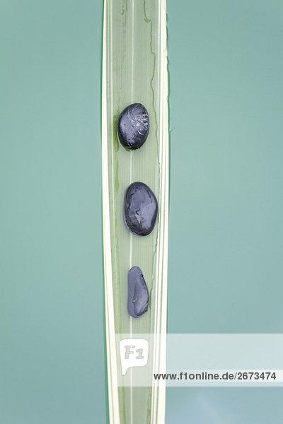 untergehen Stein Pflanzenblatt Pflanzenblätter Blatt Linie sinken