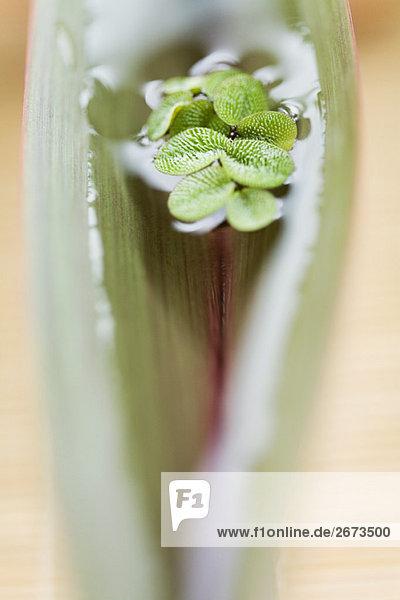 Tiefenschärfe Wasser Pflanzenblatt Pflanzenblätter Blatt fließen selektive Schärfe Unscharf Maskieren