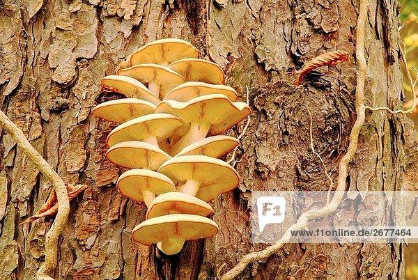 Mushrooms  Basiodiomycetes