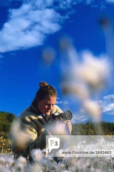 Fotograf in Tundra Wildflower (Dryas) Wiese  Whitehorse  Yukon