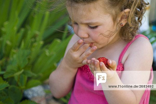 Kleines Mädchen pflückt Erdbeeren im Sommer