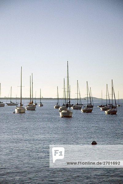 Segelboote verankert im Meer  Boston  Massachusetts  USA