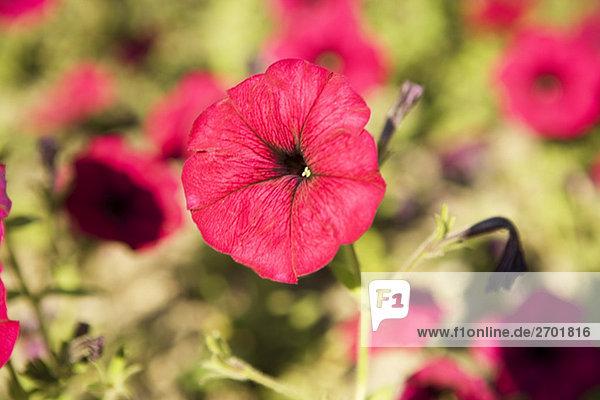 Nahaufnahme der Blumen in einem Feld