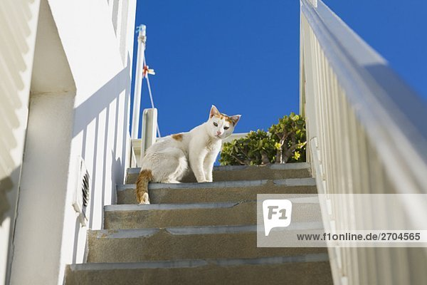 Low angle view of a cat on a staircase, Mykonos, Cyclades Islands, Greece