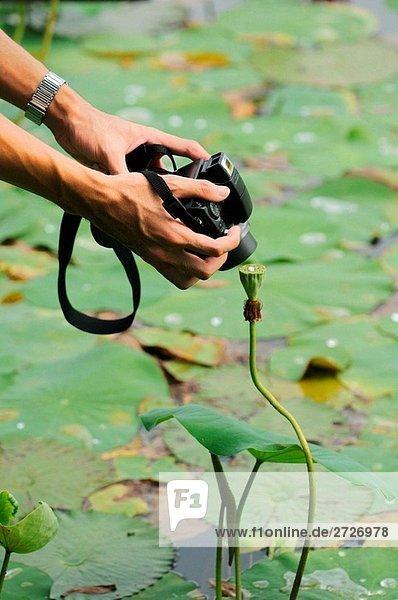 Schießen Lotus