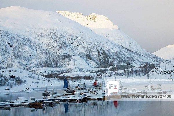 Fischerboote in Bay  Austvagoya Island  der Lofoten  Norwegen