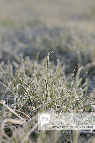 Bodenfrost im Gras an einem kalten Wintermorgen