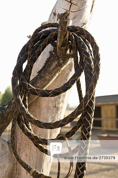 Eine Lederpeitsche  die an einem Ast hängt. Eine Lederpeitsche, die an einem Ast hängt.