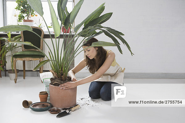 Indoor Gardener
