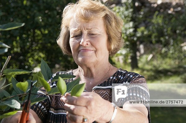 Woman cutting leaves