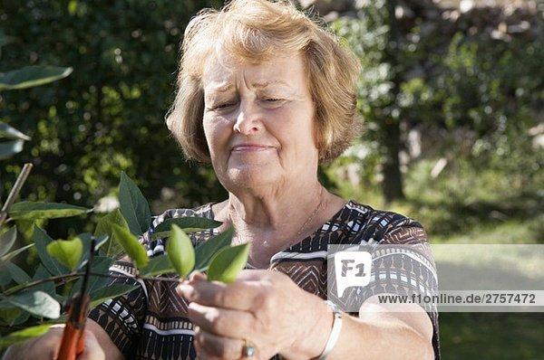Frau schneidet Blätter