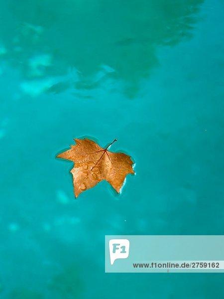 Pflanzenblatt Pflanzenblätter Blatt Herbst Schwimmbad