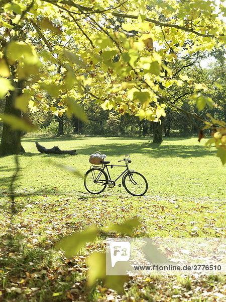 Warenkorb und Fahrrad in park