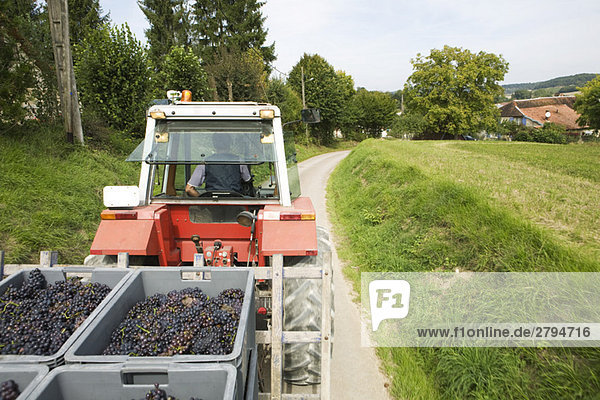 France,  Champagne-Ardenne,  Aube,  vehicle transporting grapes along country road