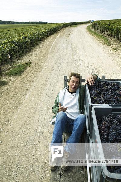 Frankreich  Champagne-Ardenne  Aube  Mann sitzend neben Traubenkästen auf LKW-Bett  Fahrt über Feldweg durch Weinberg