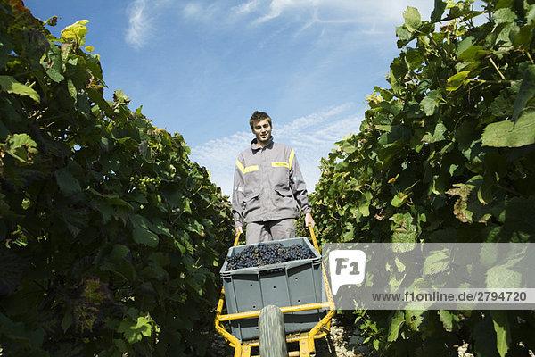Frankreich  Champagne-Ardenne  Aube  Weinleser schiebt Wagen voller Trauben im Weinberg  lächelnd vor der Kamera