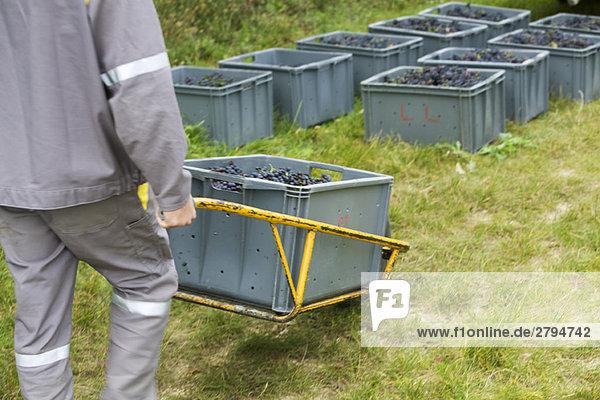 Frankreich  Champagne-Ardenne  Aube  Arbeiter beim Transport von Weintrauben  geerntet