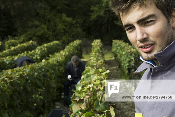 France,  Champagne-Ardenne,  Aube,  young grape harvester in vineyard