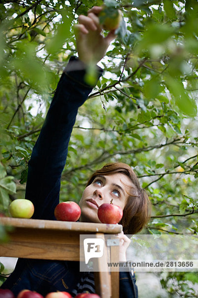 Frau Apfel aufheben