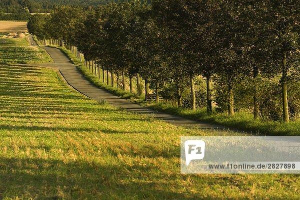 Bäume entlang Road  Bad Camberg  Landkreis Limburg-Weilburg  Hessen  Deutschland
