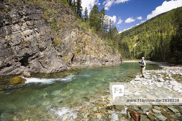Fly-fishing on tributary of Elk River near Fernie  Elk Valley  East Kootenays  British Columbia  Canada.