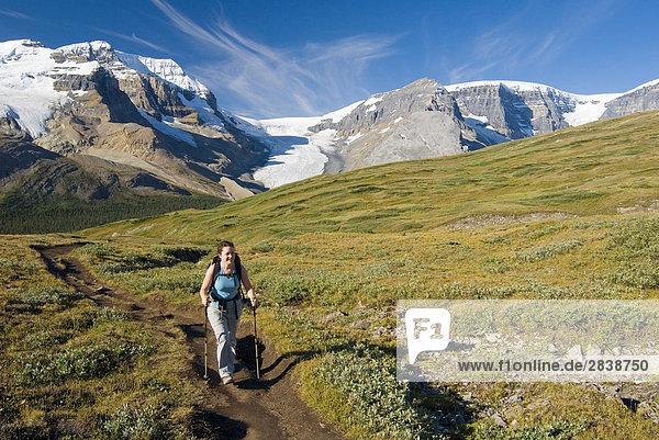 Frau Wandern bis zum Wilcox-Pass mit der Athabasca-Gletscher und der Columbia Eisfeldern gebären im Hintergrund  Jasper-Nationalpark in Alberta  Kanada.