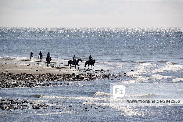 reiten - Pferd Bay of Fundy New Brunswick Neubraunschweig
