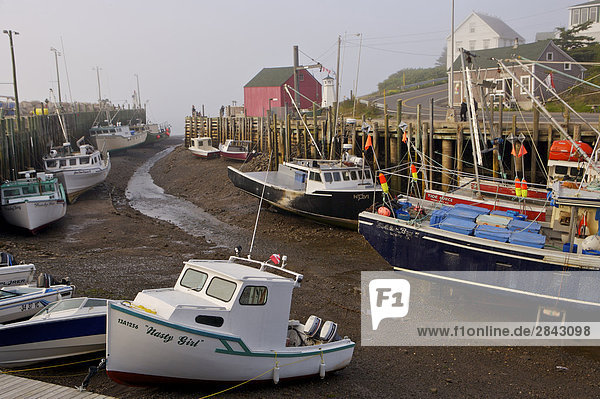 Boats tied to the wharf in Halls Harbour  Bay of Fundy  Minas Channel  Evangeline Trail  Nova Scotia  Canada.