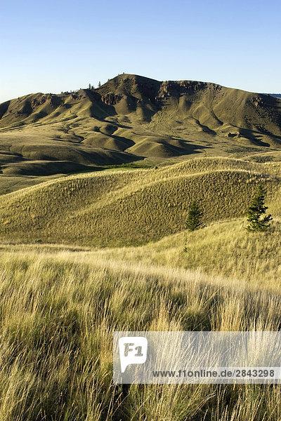 Grasland in Junction Schafe Bereich Park  British Columbia  Kanada
