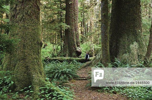 Carmanah Täler  Stoltman Grove  Vancouver Island  British Columbia  Kanada.