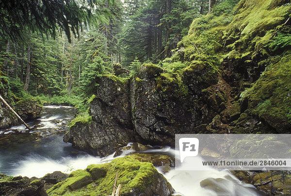 Stream durch den zentralen Küste Regenwald  British Columbia  Kanada.