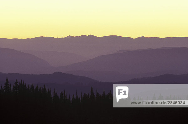 Bergrücken  Shuswap Region  British Columbia  Kanada.