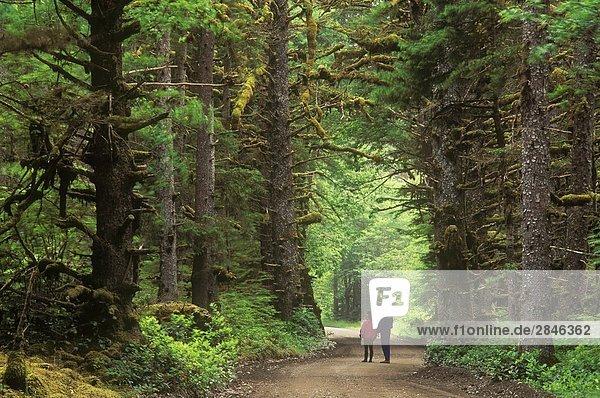 Alten Waldbestands von Naikoon Provincial Park  British Columbia  Kanada.