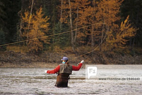 fliegenfischend  Bulkley River  British Columbia  Kanada.