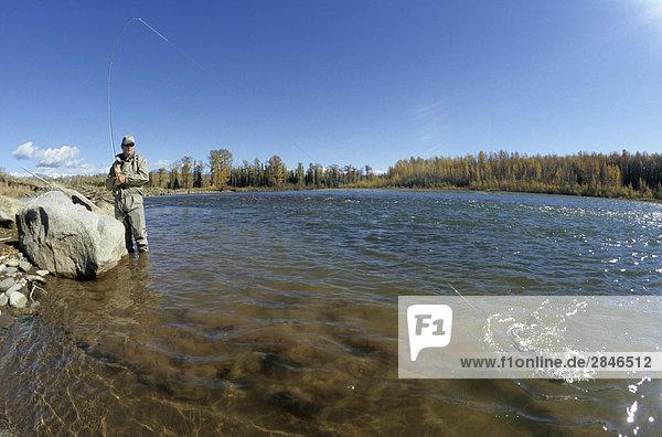 Fliegenfischer spielen Steelhead  Bulkley River  Smithers  British Columbia  Kanada.