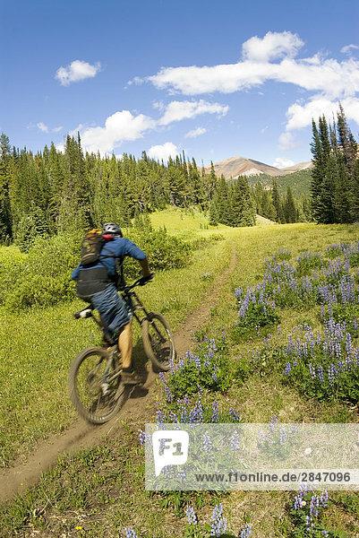 Mountainbiker Fahrten der Weg zum Deer Pass  südlichen Chilcotin Bergen  British Columbia  Kanada.
