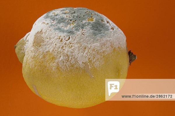 Schimmlige Zitrone  Nahaufnahme