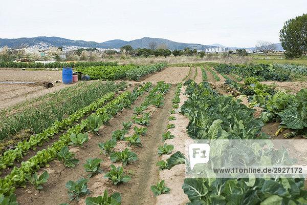 Vielfalt des Gemüseanbaus auf dem Feld