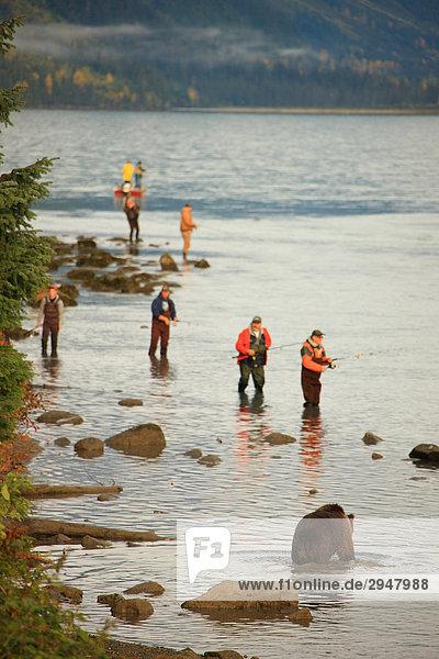 Fischer und ein Grizzlybär im Chilkoot River  Haines  Alaska