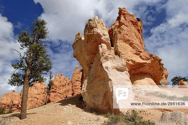 Kalksteinformation  sog. Hoodoos  Bryce Canyon National Park  Utah  USA