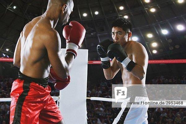 Zwei Boxer im Boxring kämpfen